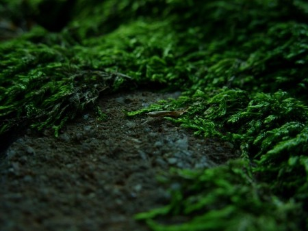 forest-633874_640