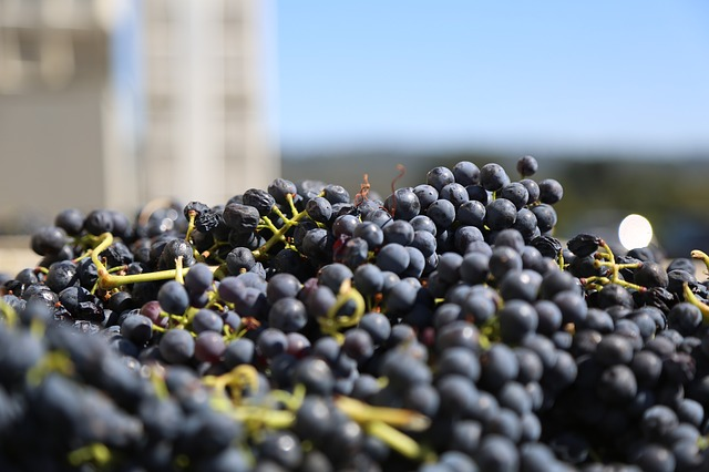 grapes-825998_640