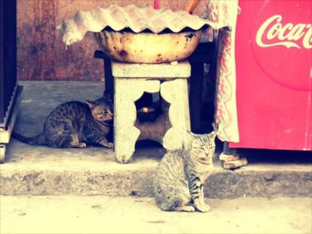 れんた猫_R