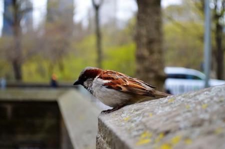 bird-665919_640