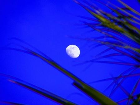moon-191676_640
