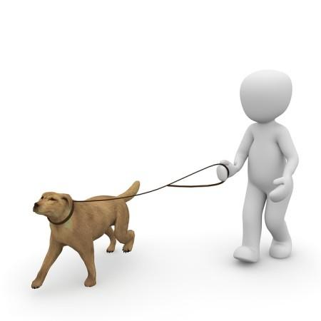dog-1015660_640