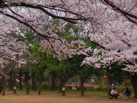 image桜2_R